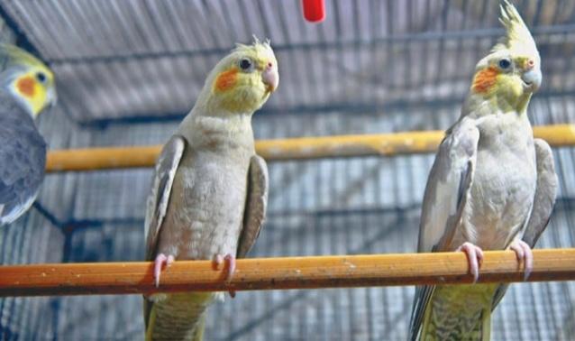 UK authorities prohibit keeping birds from December 14 amidst cases of bird flu