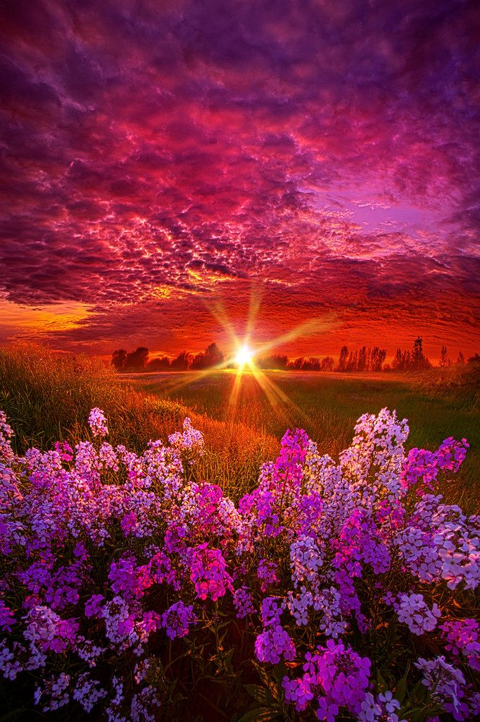 Pink sunrises & golden mornings add healing virtues to fly above on wings
