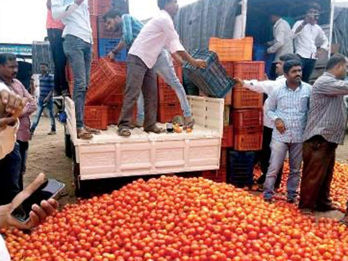 Nashik farmers dump tomatoes on road after prices crash to Rs 1-2 per kg